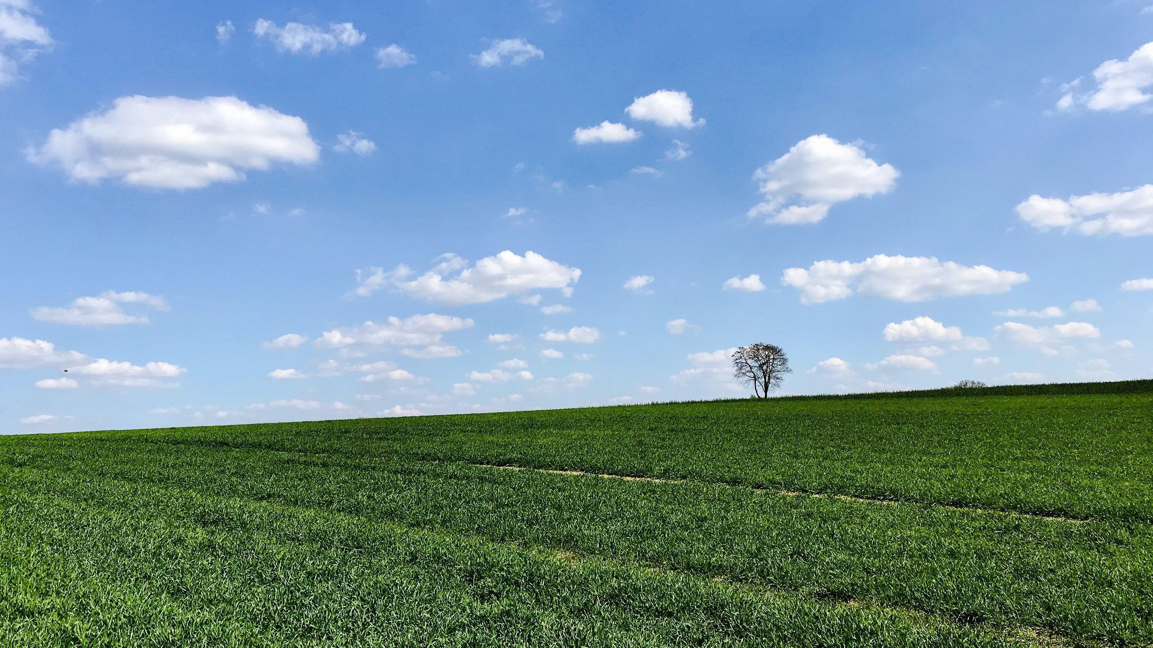 Склон дерево трава горизонт небо обои скачать