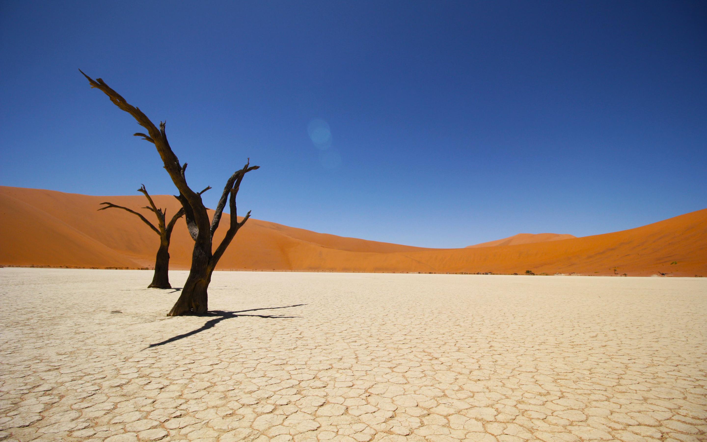 Namib coastal desert. обои скачать