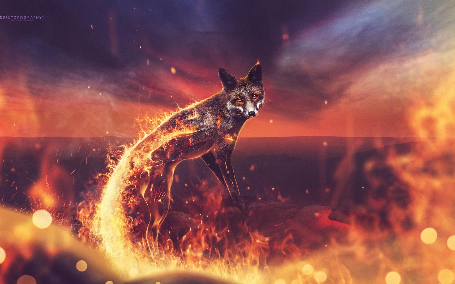 Огненная лиса. обои скачать