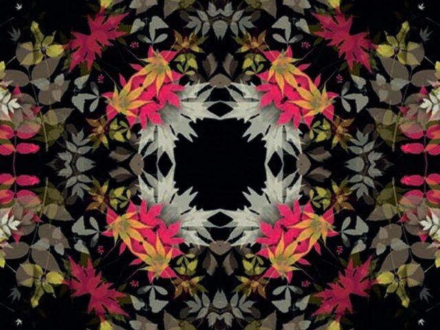 Розовый желтый белый листья черный фон абстракция абстракция