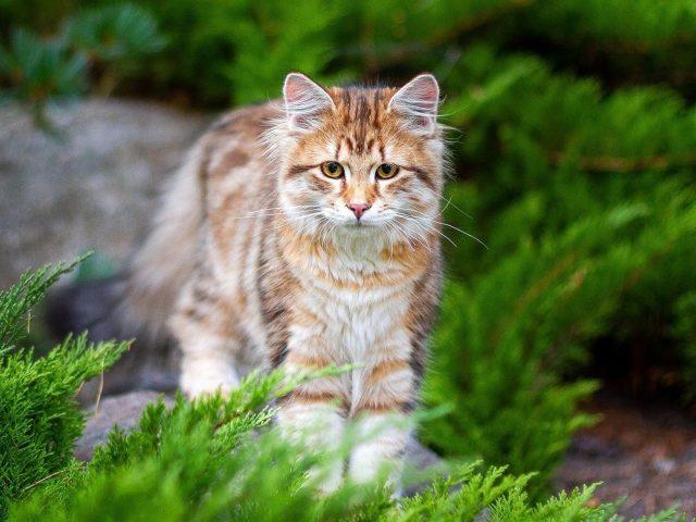 Желтые глаза коричневый белый черный стоит на фоне сине-зеленых листьев может