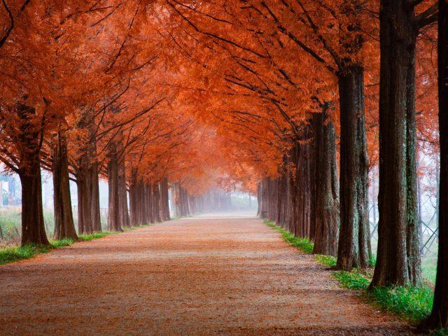 Осенние пейзажи парка