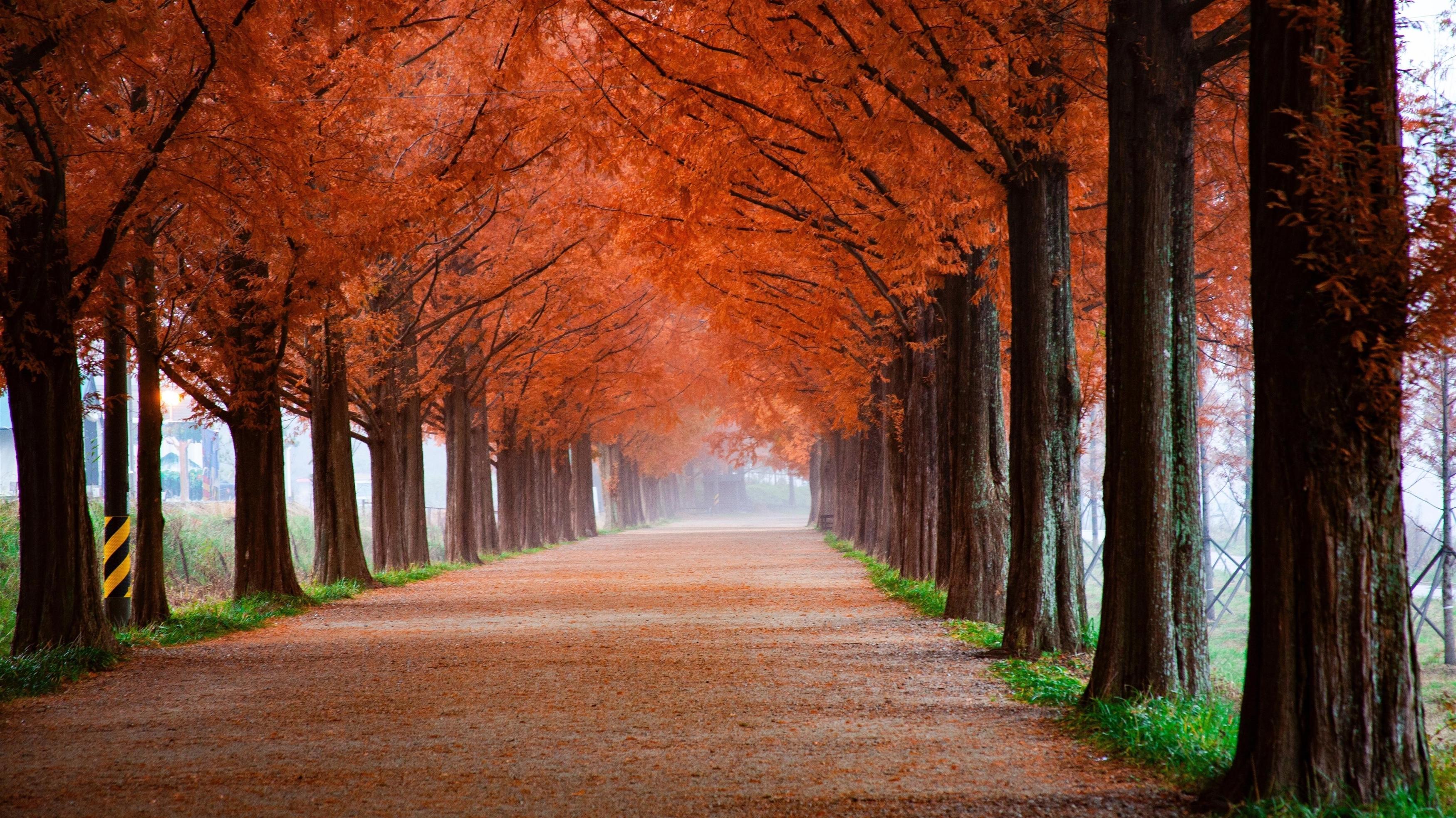 Осенние пейзажи парка обои скачать