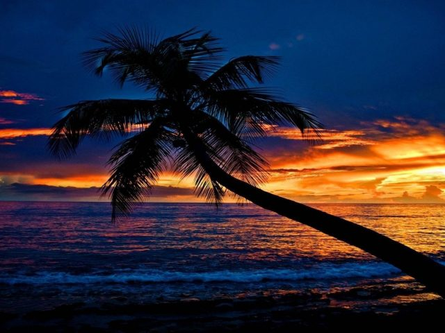 Тропический закат пляж наклонная пальма океанские волны небо облака силуэт фон природа