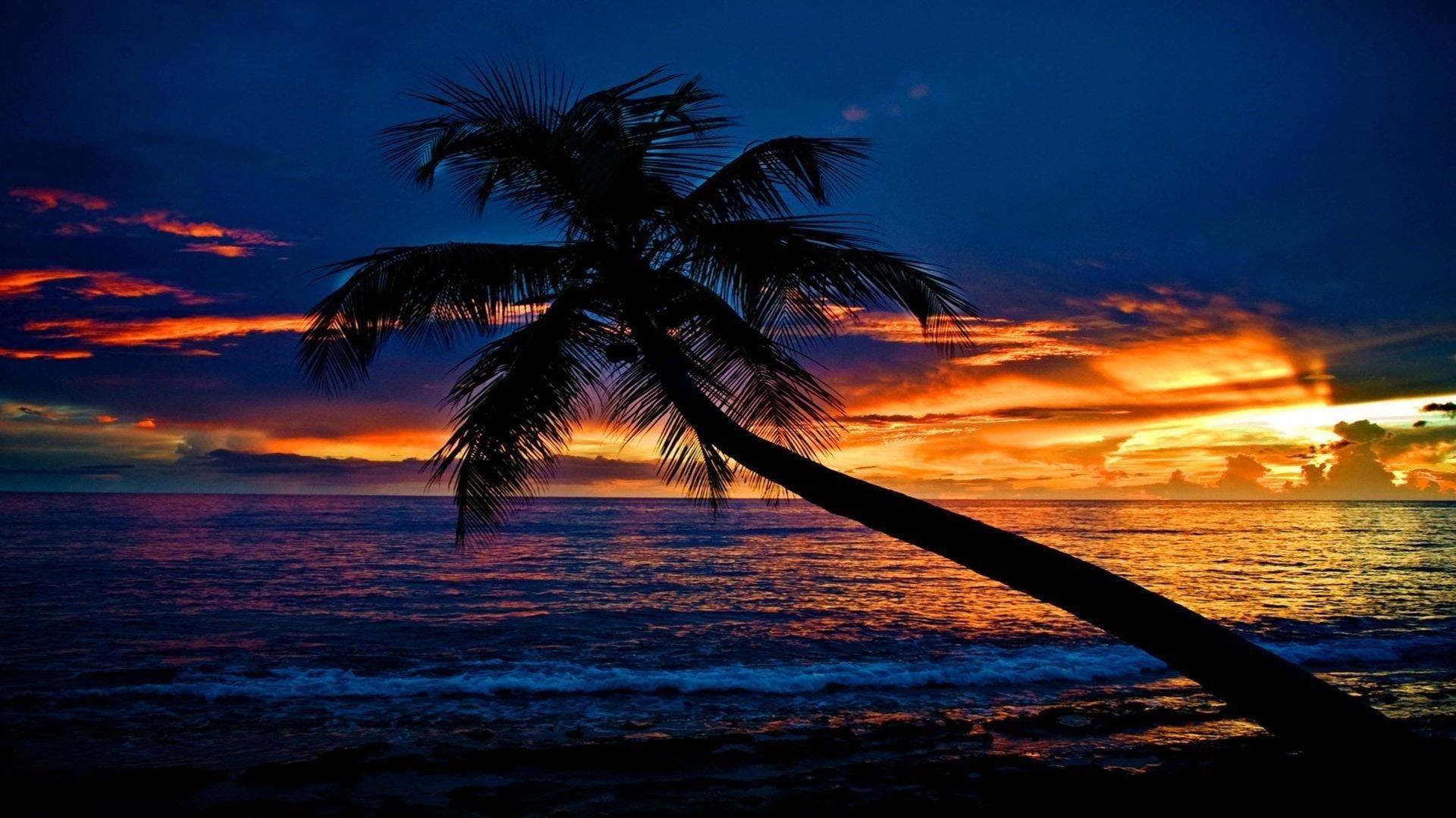 Тропический закат пляж наклонная пальма океанские волны небо облака силуэт фон природа обои скачать