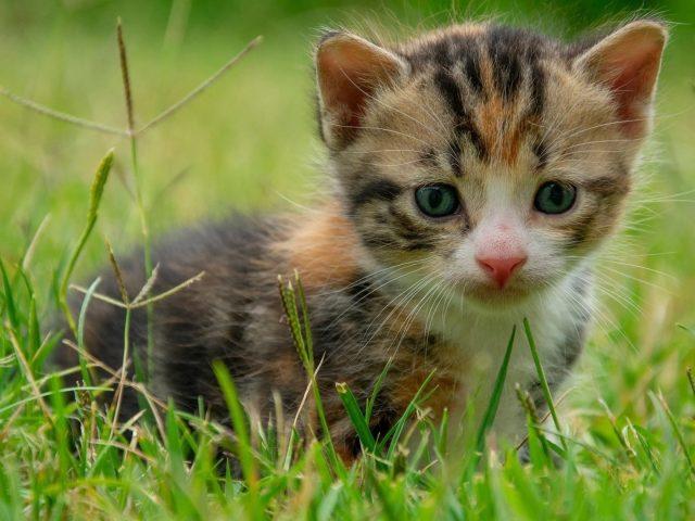 Коричневый черный котенок стоит на зеленой траве в размытом зеленом фоне котенка