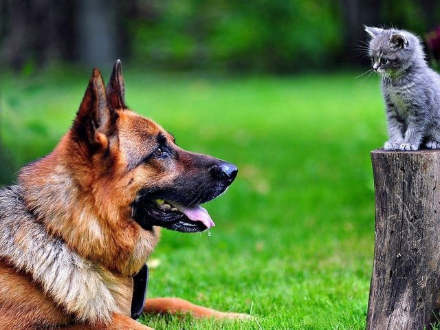 Собака и кошка смотрят