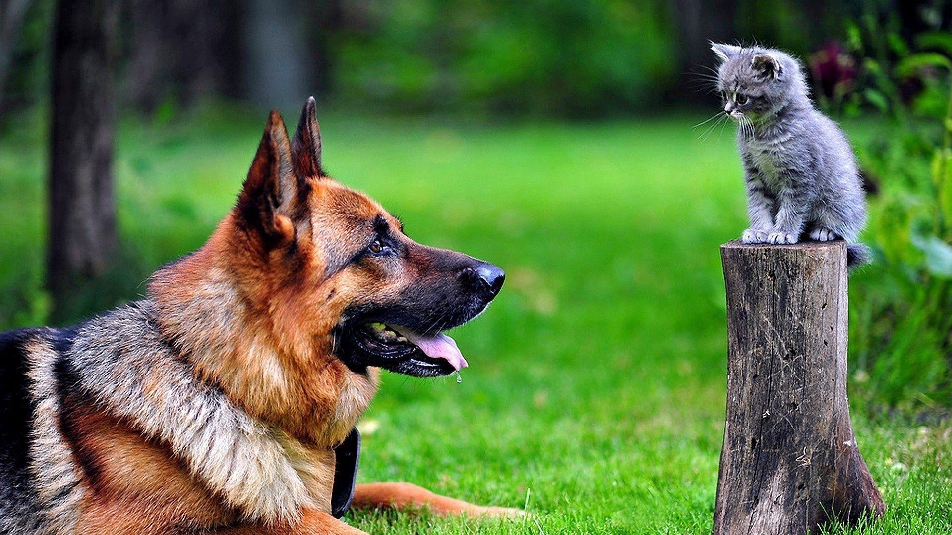 Собака и кошка смотрят обои скачать