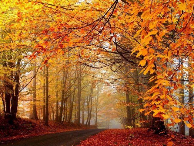 Дорога между желто красными осенними листьями деревьев с туманной природой