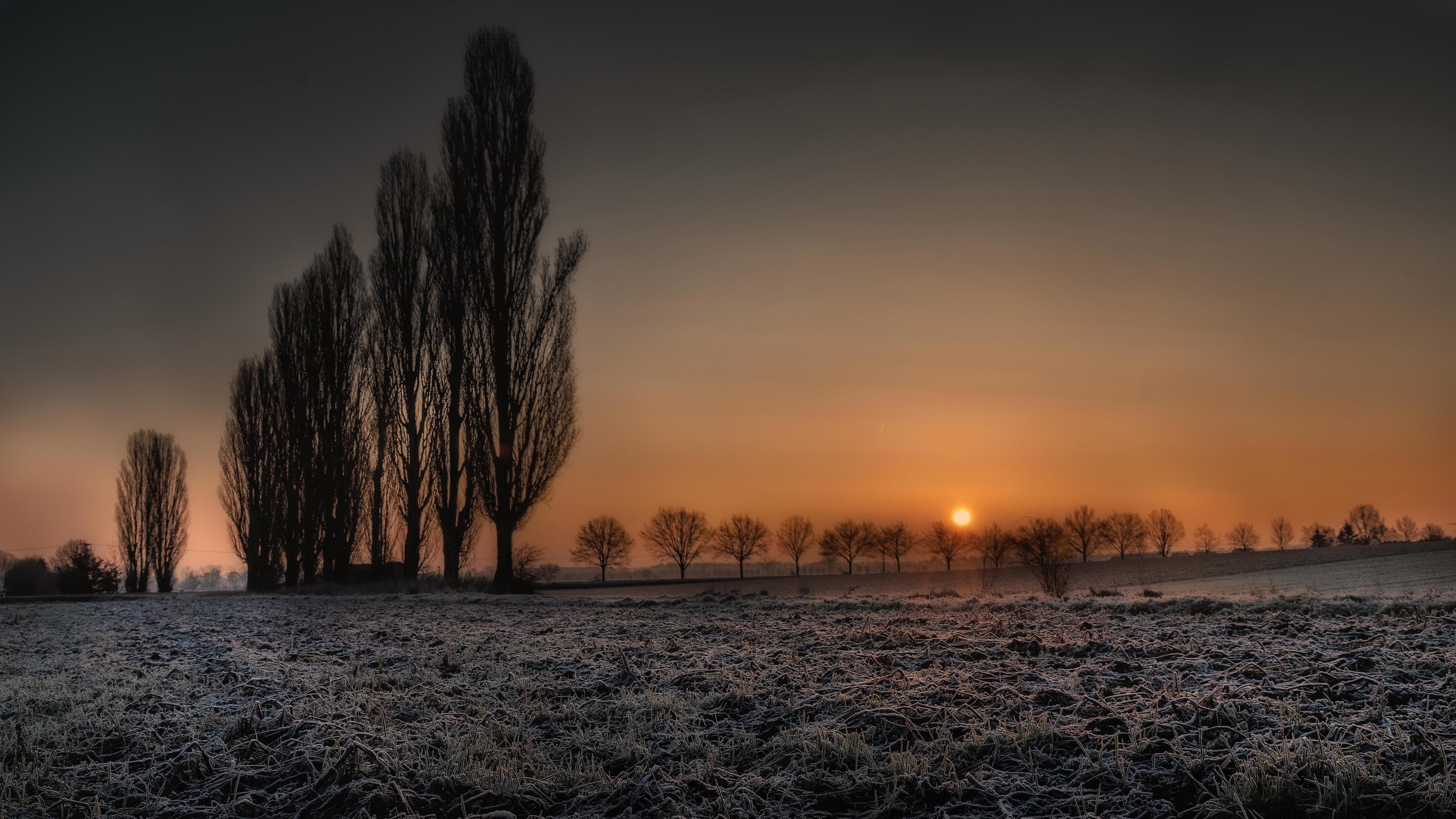 Силуэт деревьев на сухом поле во время заката природа обои скачать