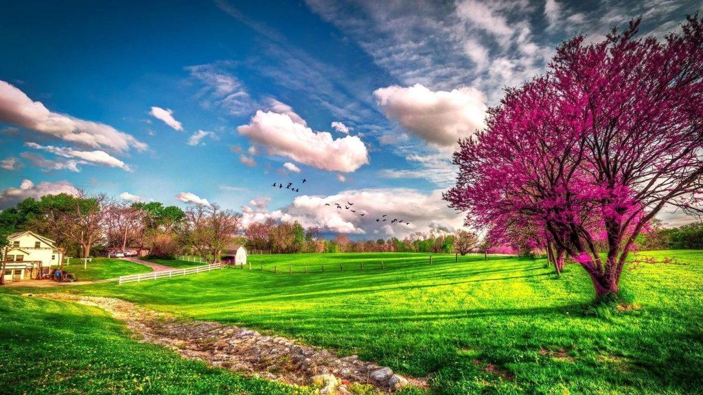 Деревья с розовыми цветами на зеленой траве под голубым облачным небом с птицами цветами обои скачать