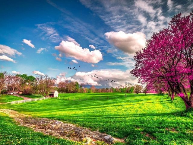 Деревья с розовыми цветами на зеленой траве под голубым облачным небом с птицами цветами