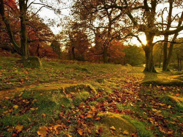 Зеленые деревья покрытые водорослями скалы трава сухие листья солнечные лучи природа