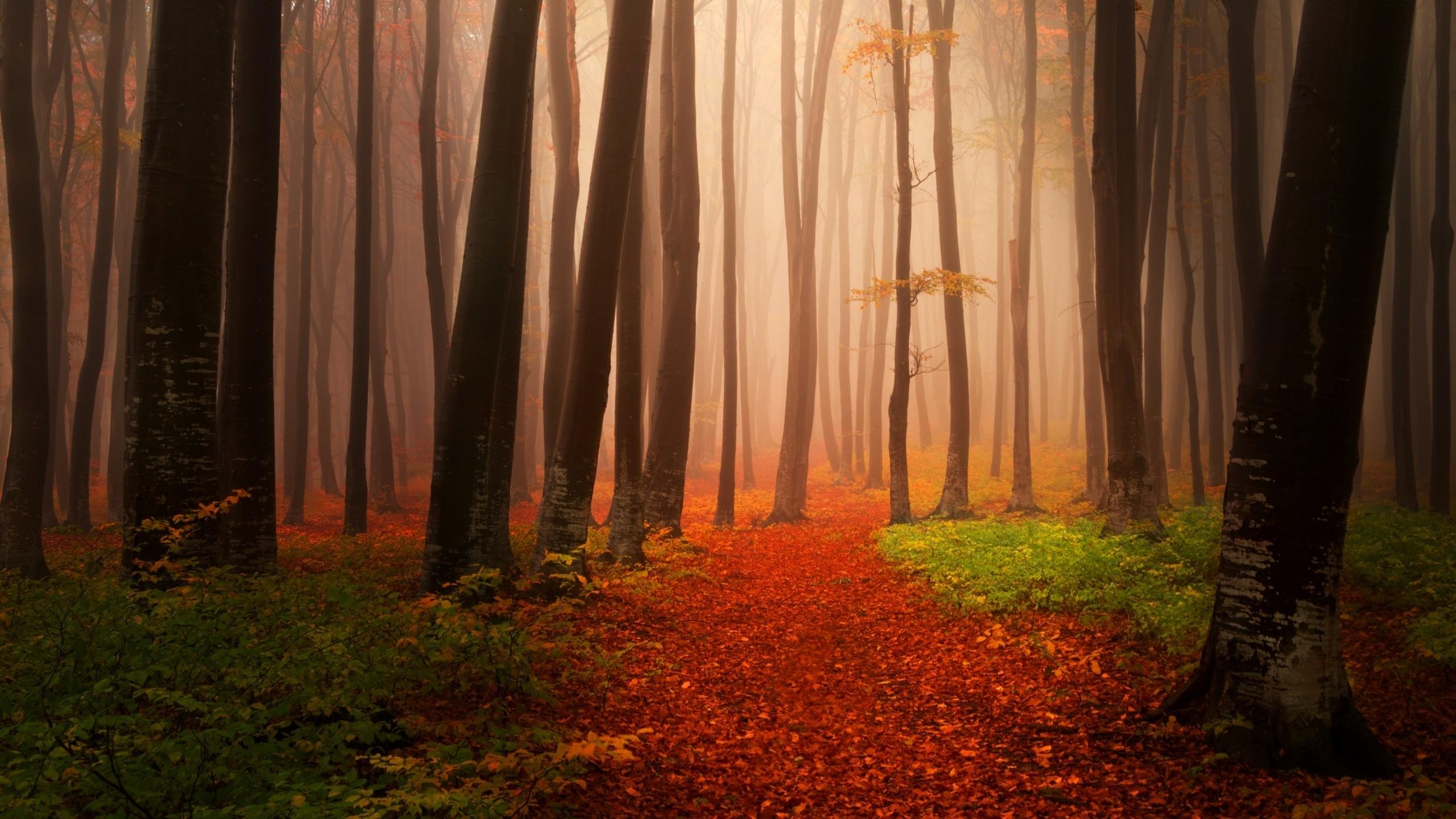 Туманный осенний лес. обои скачать