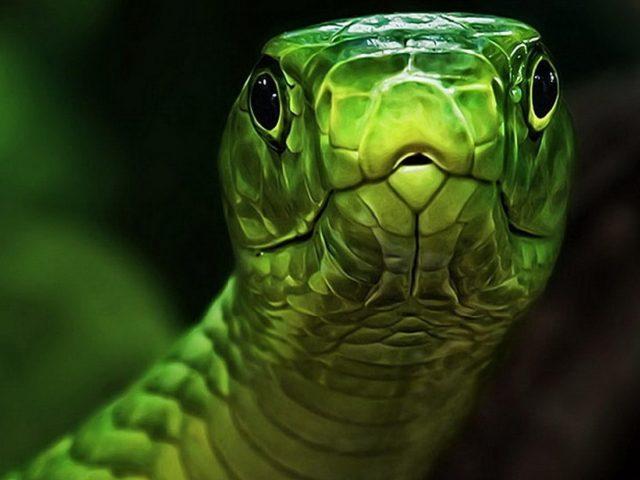 Зеленые и серые змеиные животные