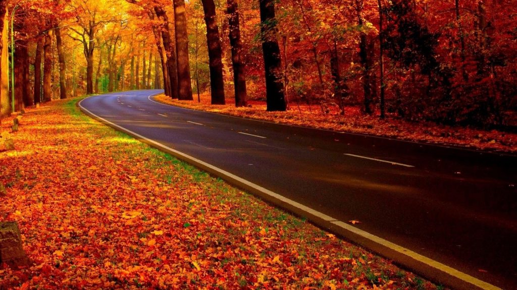 Бетонная дорога между красочными осенними деревьями лес в осенний сезон природа обои скачать