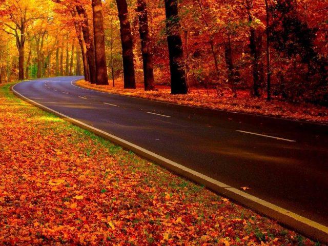 Бетонная дорога между красочными осенними деревьями лес в осенний сезон природа