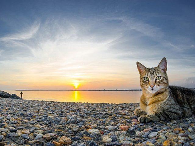 Желтые глаза коричнево-черная кошка со звездным взглядом сидит на каменной гальке на фоне пляжа во время заката кошка