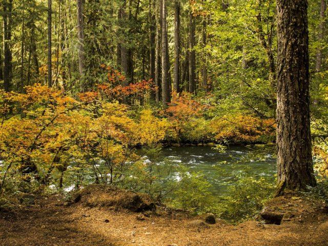 Река, проходящая через лес с зелеными деревьями в дневное время природа
