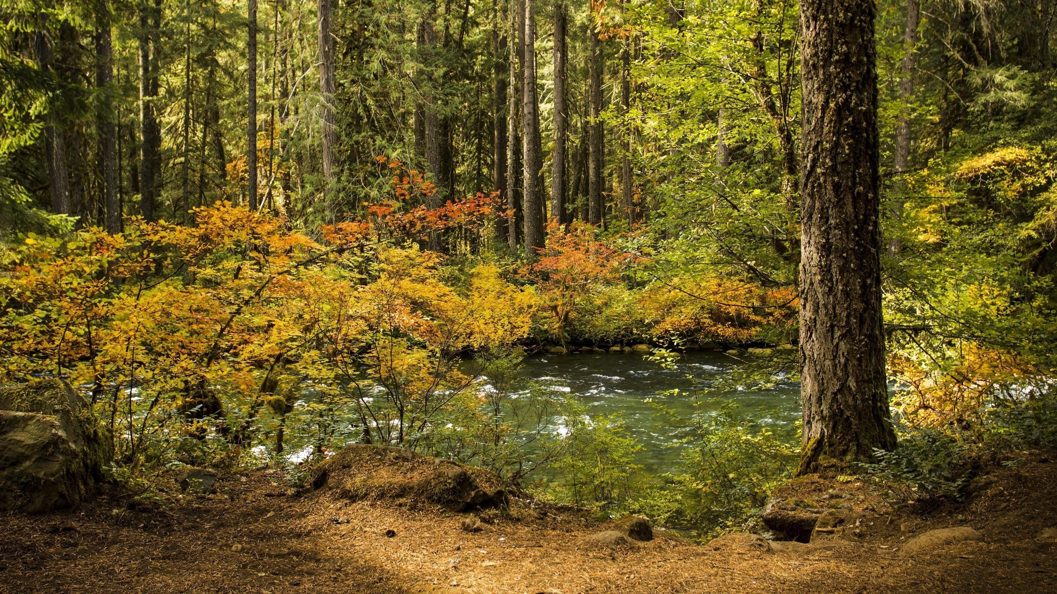 Река, проходящая через лес с зелеными деревьями в дневное время природа обои скачать
