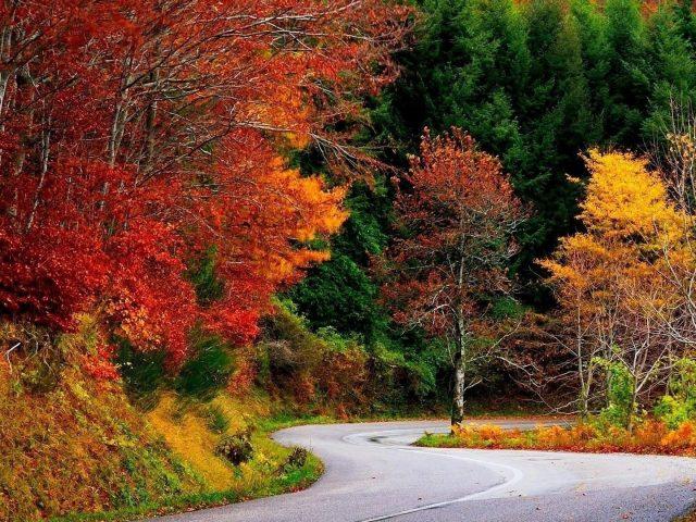 Дорога между красными желтыми оранжевыми зелеными осенними осенними деревьями природа