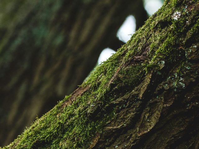 Дерево кора мох фокус фон