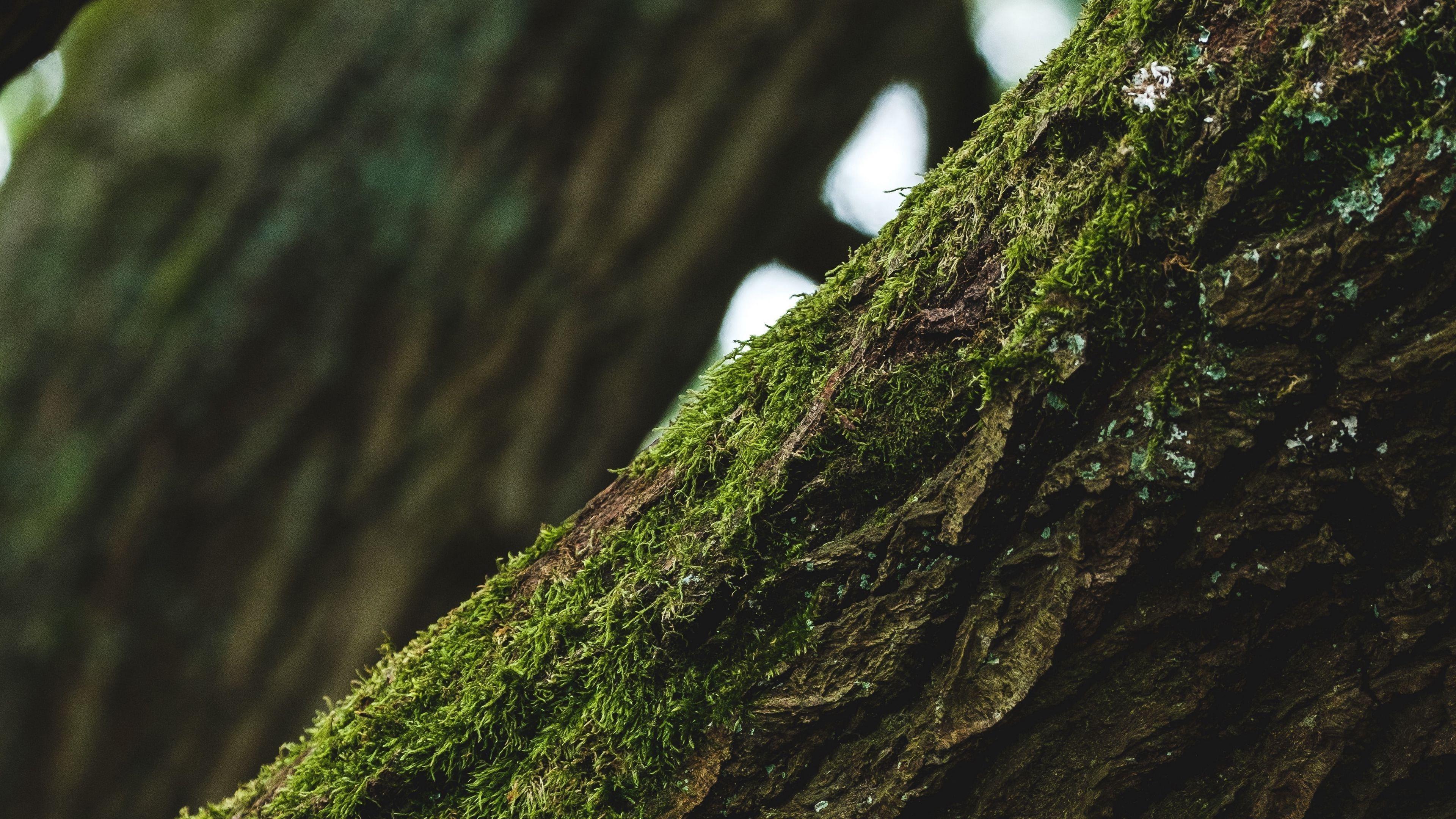 Дерево кора мох фокус фон обои скачать