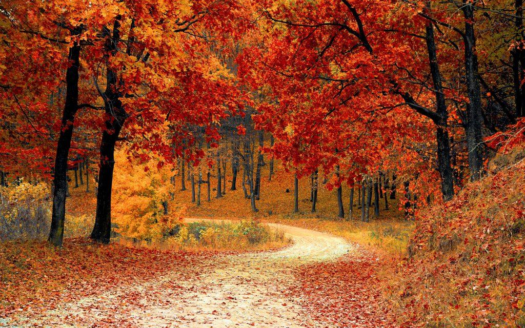 Осень осеннего сезона. обои скачать
