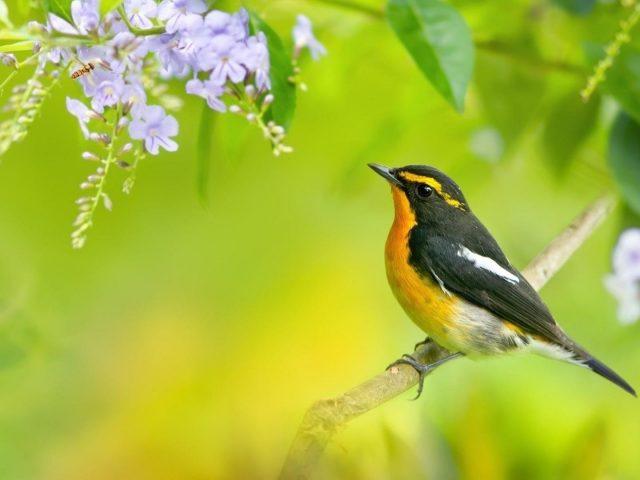Желтая и черная птица майя на ветке дерева в размытом зеленом фоне животные