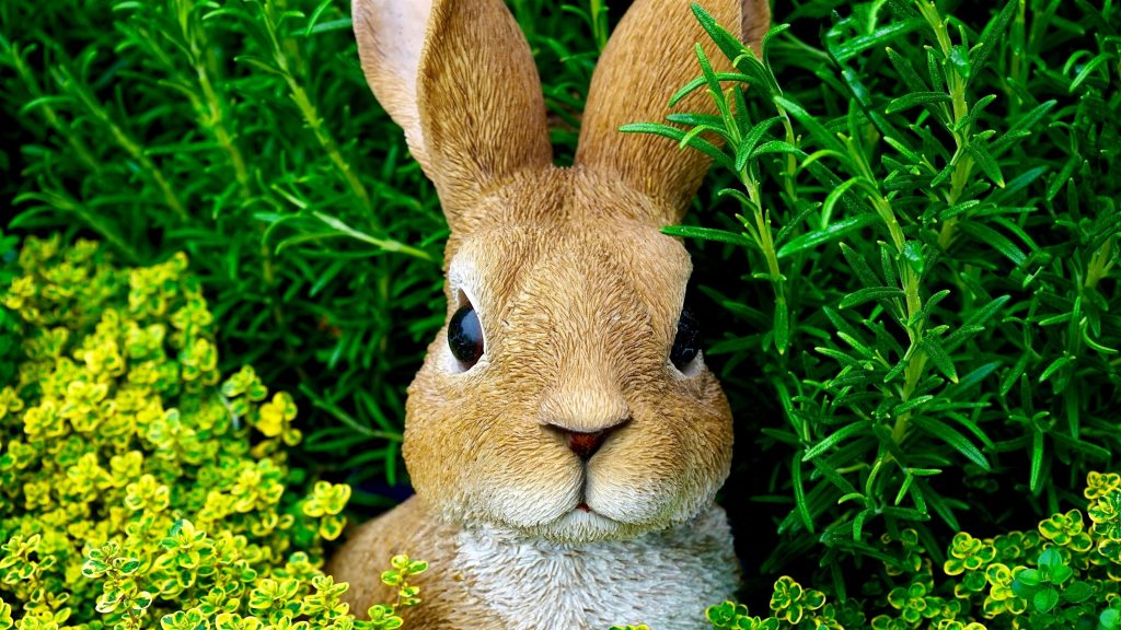 Коричневый кролик находится посреди зеленых растений кролика обои скачать