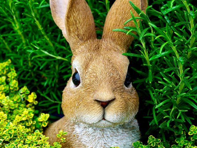 Коричневый кролик находится посреди зеленых растений кролика