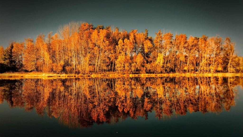 Желтые осенние деревья отражение на водоеме природа обои скачать