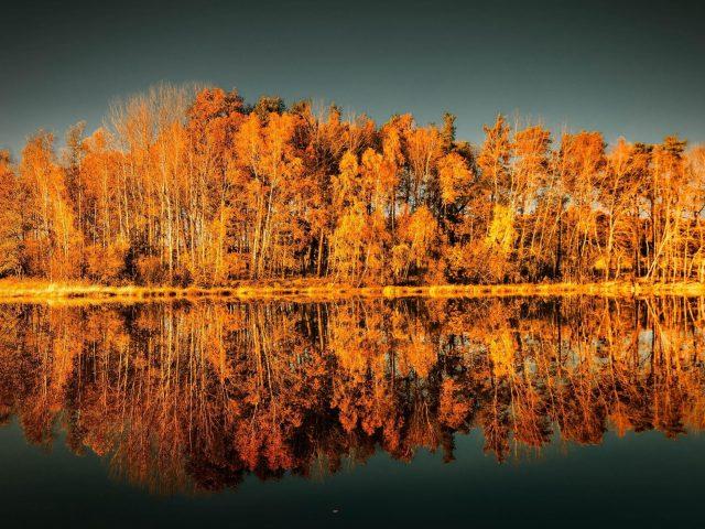 Желтые осенние деревья отражение на водоеме природа