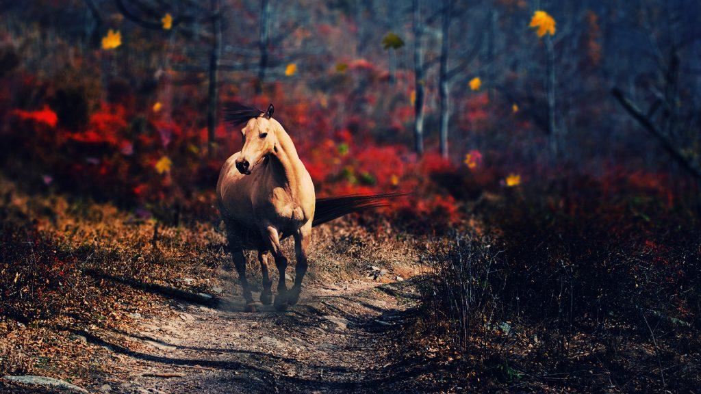 Одна лошадь. обои скачать