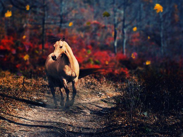 Одна лошадь.