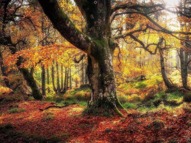 Покрытые водорослями деревья и осенние деревья в лесу с солнечным лучом природы
