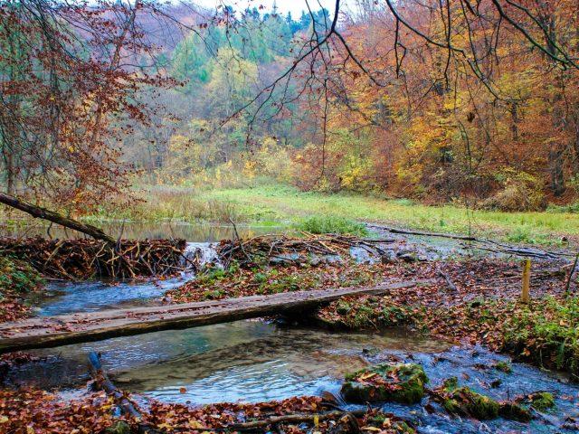 Деревянное бревно сухие листья зеленая трава поле красочные осенние деревья лес застой воды природа