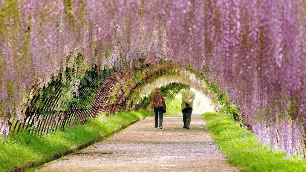 Люди идут под цветущими цветами аркой цветов обои скачать