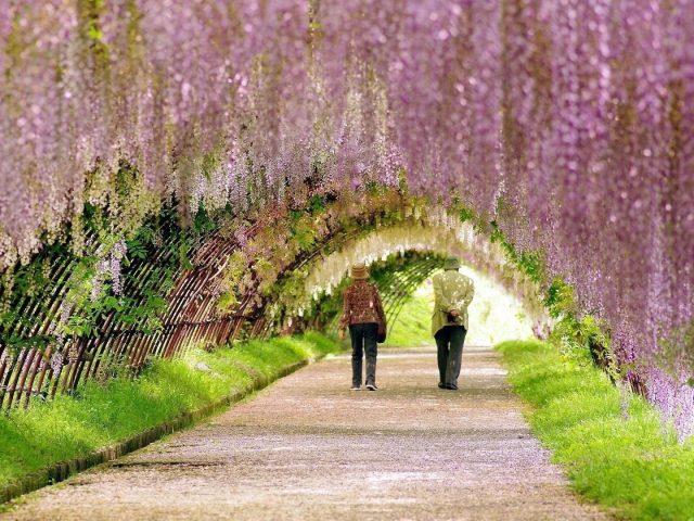 Люди идут под цветущими цветами аркой цветов