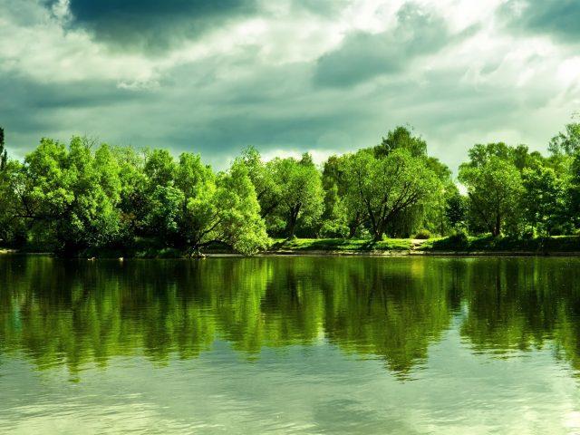 Зеленые деревья перед озером с пасмурной в дневное время природой