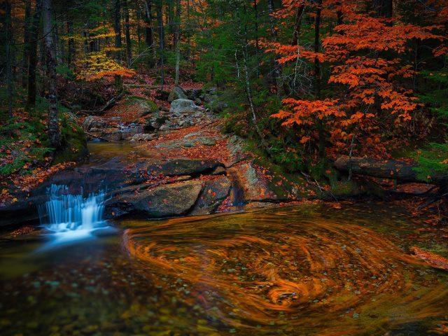 Водный поток в лесу с листвой деревьев природа