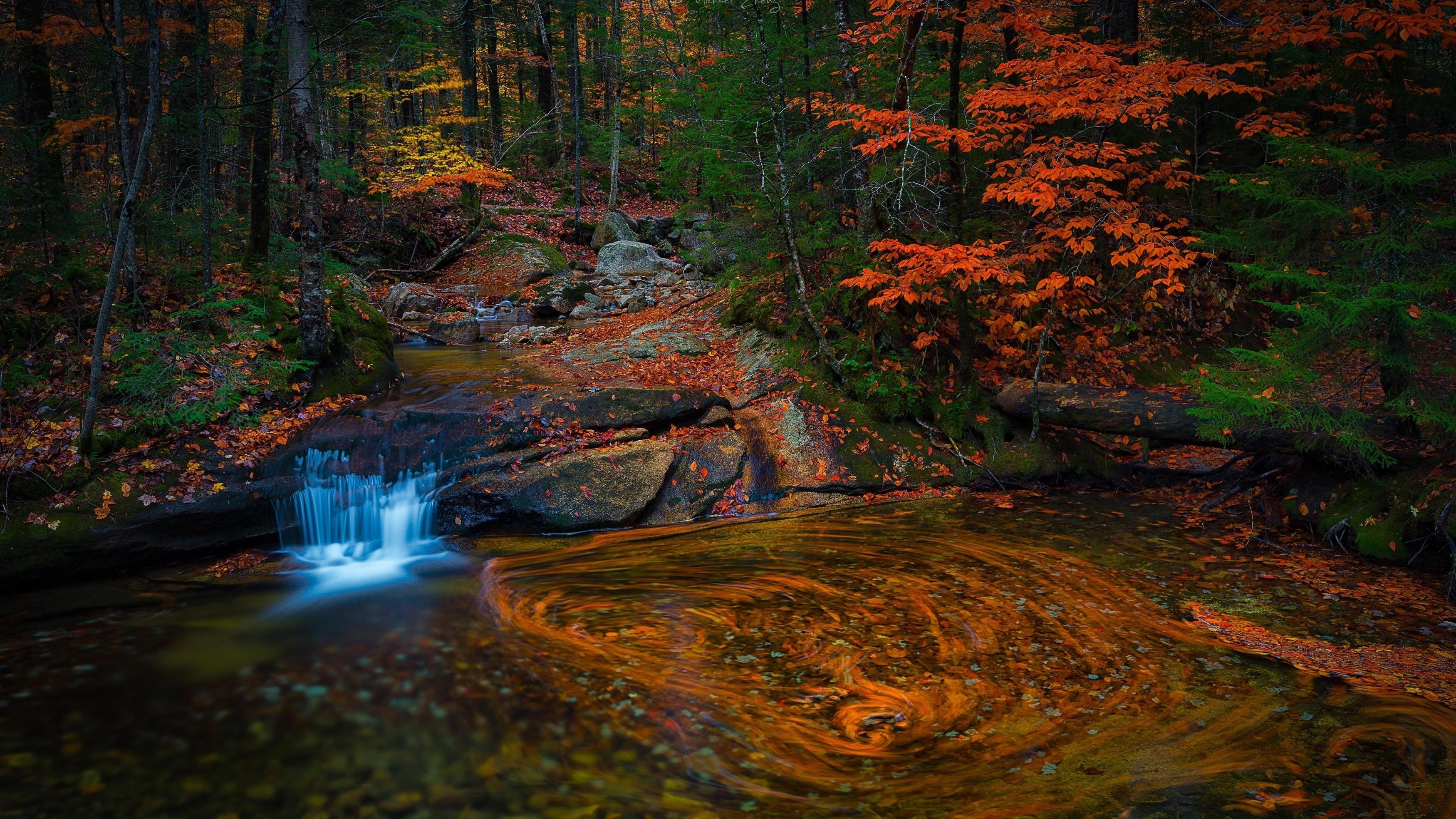 Водный поток в лесу с листвой деревьев природа обои скачать