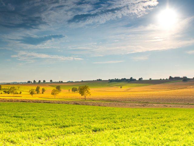Весенний солнечный пейзаж.