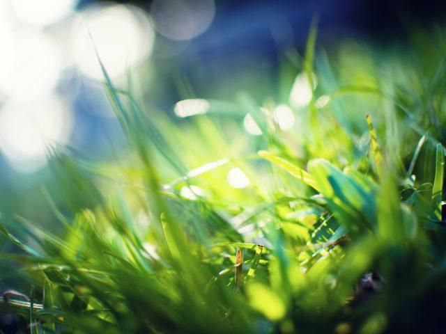 Лето,  зелень