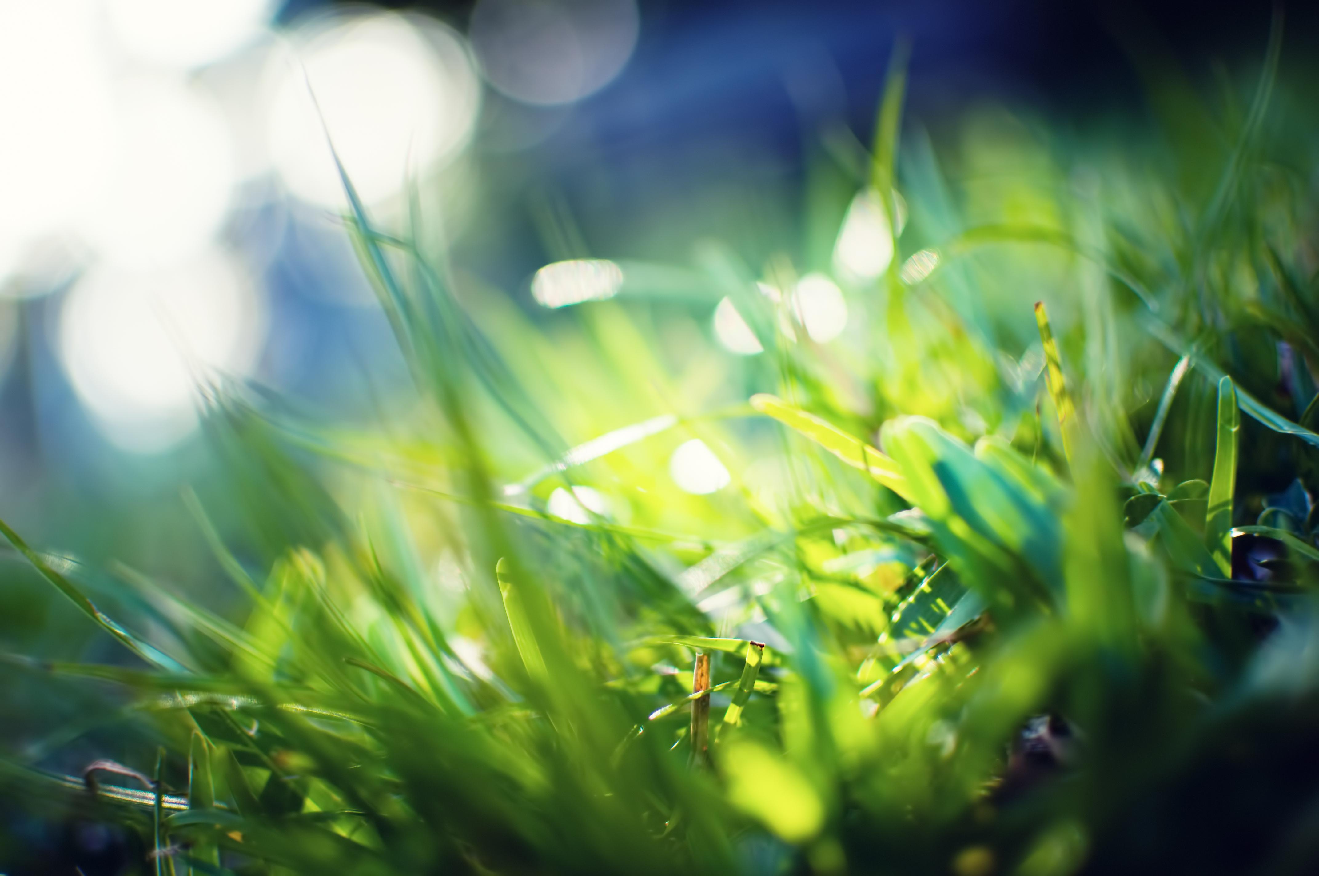 Лето, зелень обои скачать