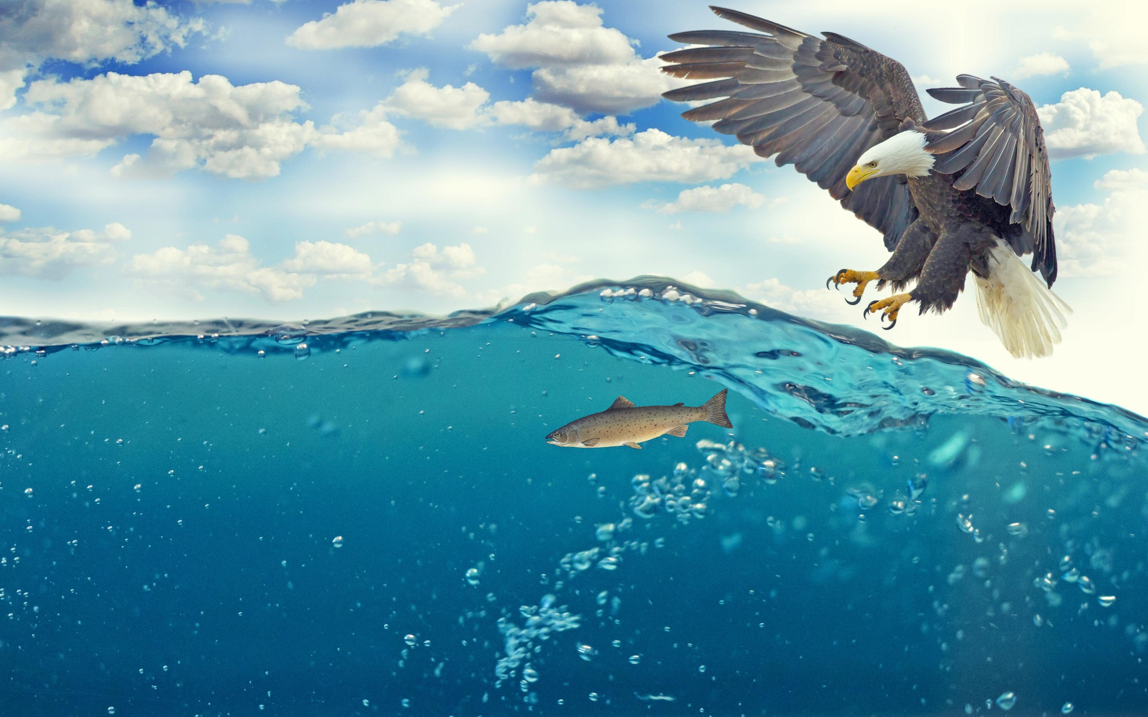 Орел рыба под водой. обои скачать