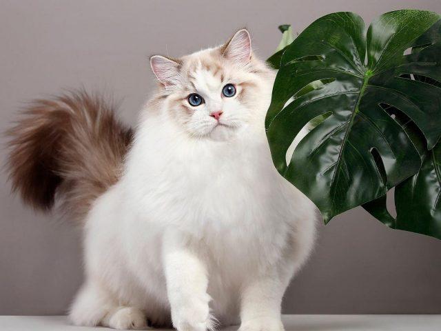 Симпатичная белая кошка стоит рядом с большими зелеными листьями на белом фоне животных