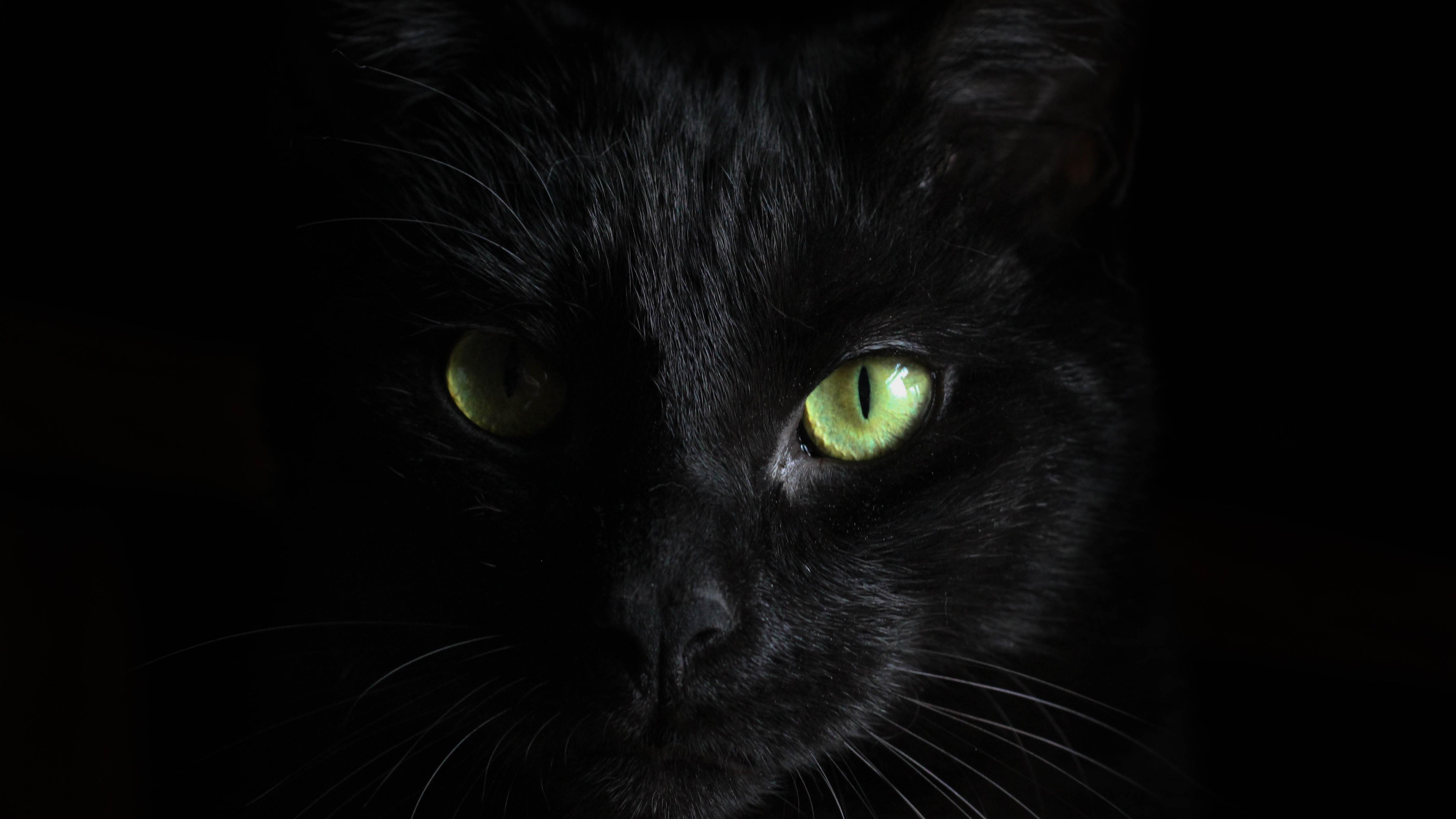 Черная кошка обои скачать