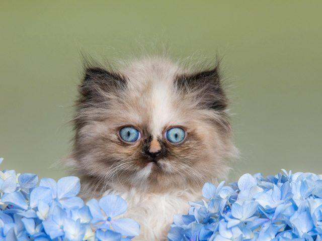 Животное кошка 1
