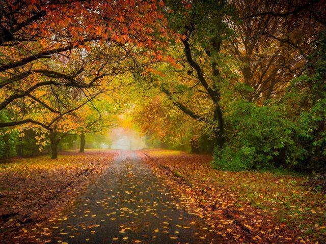 Дорога между зелеными желтыми деревьями под ярким небом в дневное время природа